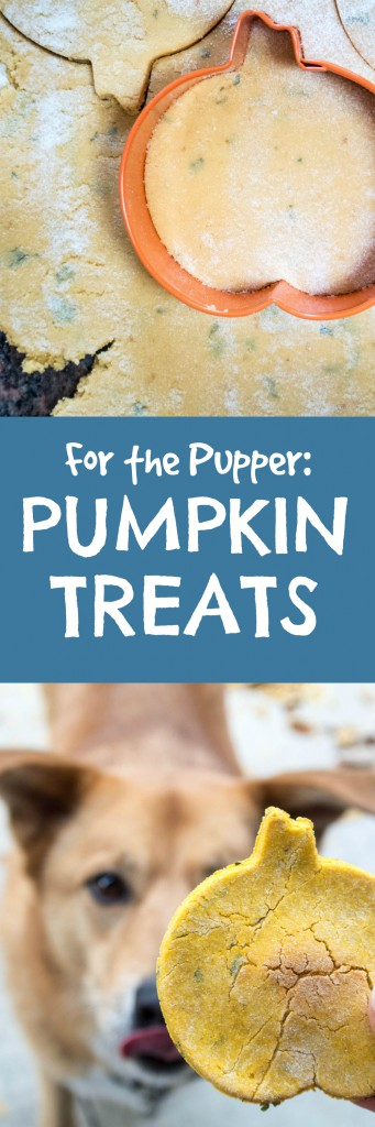 Pumpkin Treats