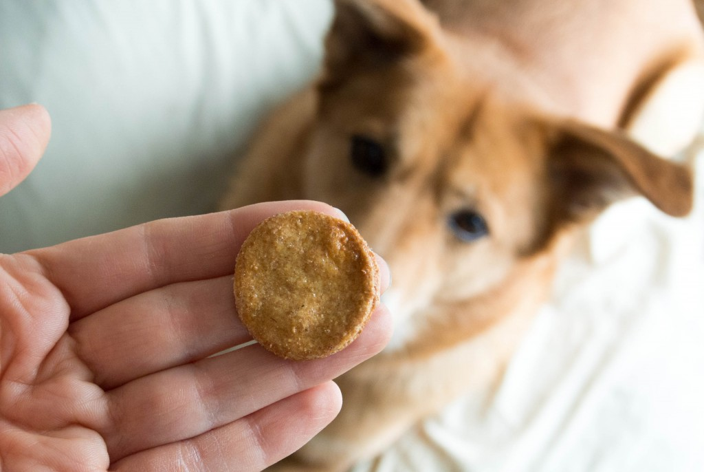 Make your own dog treats! Chicken Broth Coins, from My Utensil Crock